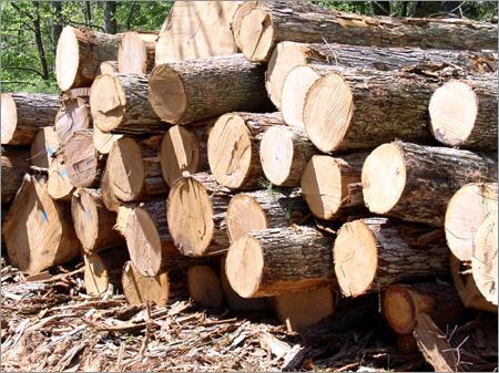Timber-Logs