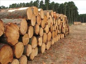 ydtg8kj776_timber